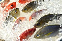 Welche Fische Kann Man Bedenkenlos Essen