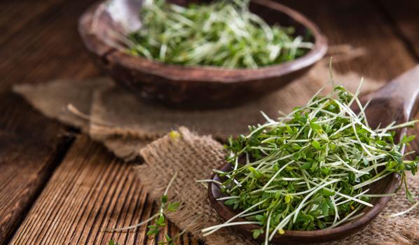 Gartenkresse: Ideale Kräuter für die Küche