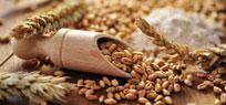 Die Getreidemühle – Helfer in der Vollwertküche
