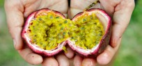 Maracuja: Köstliche Passionsfrucht mit tropischem Innenleben