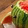 Der Melonen-Hai