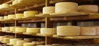 Käseherstellung – von der Milch zum Käselaib