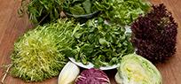 Salat ABC
