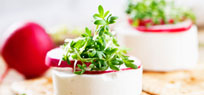 Kresse: pflanzen, ernten, dekorieren und genießen