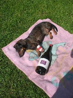 Nochmal Sommerwein 3357640715