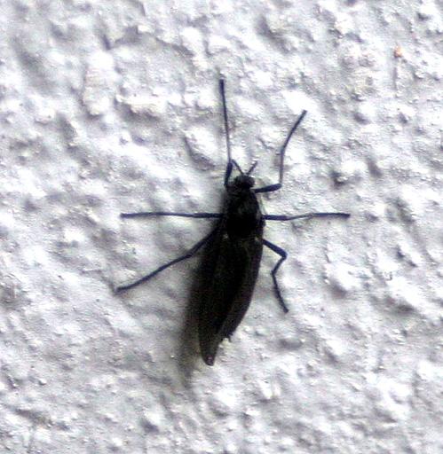 Insekten Invasion Sonstiges Plauderecke Forum Chefkoch De