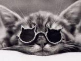 katzen mit brillen 22 lustige bilder f r echte katzenliebhaber pictures to pin on pinterest. Black Bedroom Furniture Sets. Home Design Ideas