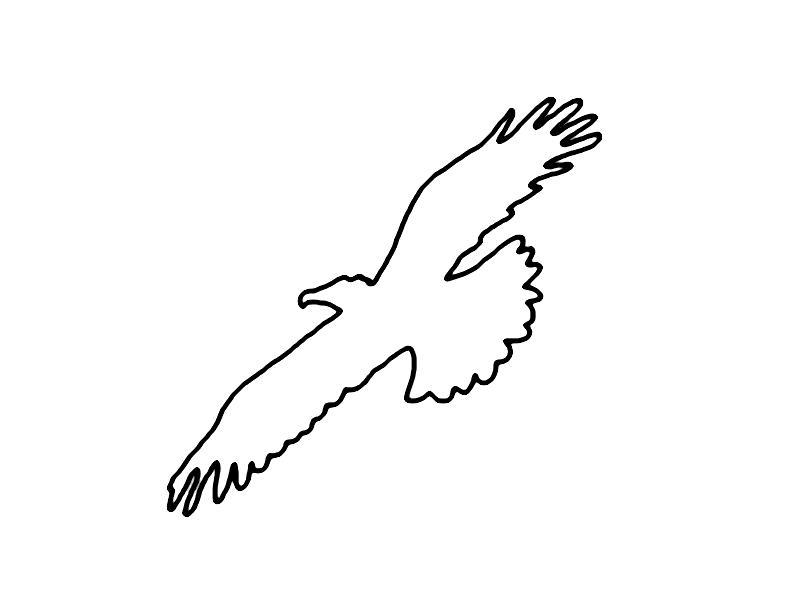 Beste Weißkopfseeadler Malvorlagen Für Kinder Galerie - Entry Level ...