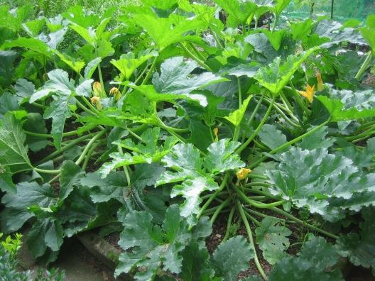 zucchini pflanzerl rezepte suchen. Black Bedroom Furniture Sets. Home Design Ideas