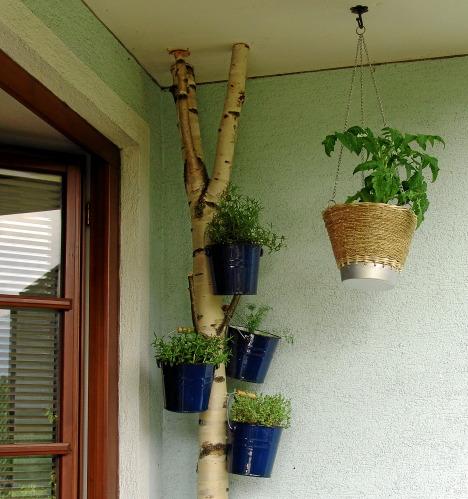 kr uter auf dem balkon haus garten forum. Black Bedroom Furniture Sets. Home Design Ideas