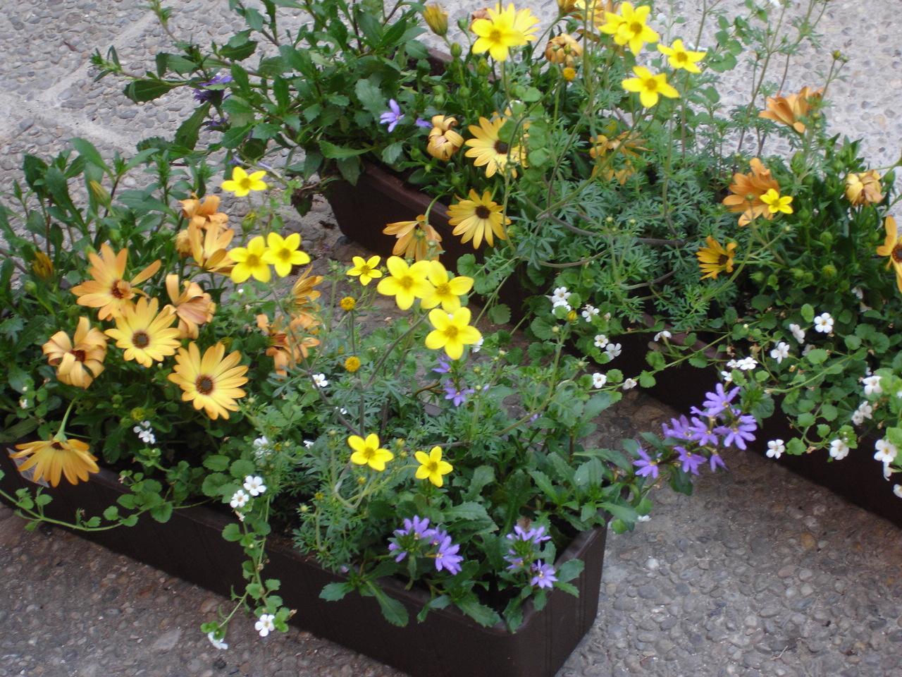 was pflanzt ihr so in eure balkonk sten und wieviel gebt. Black Bedroom Furniture Sets. Home Design Ideas