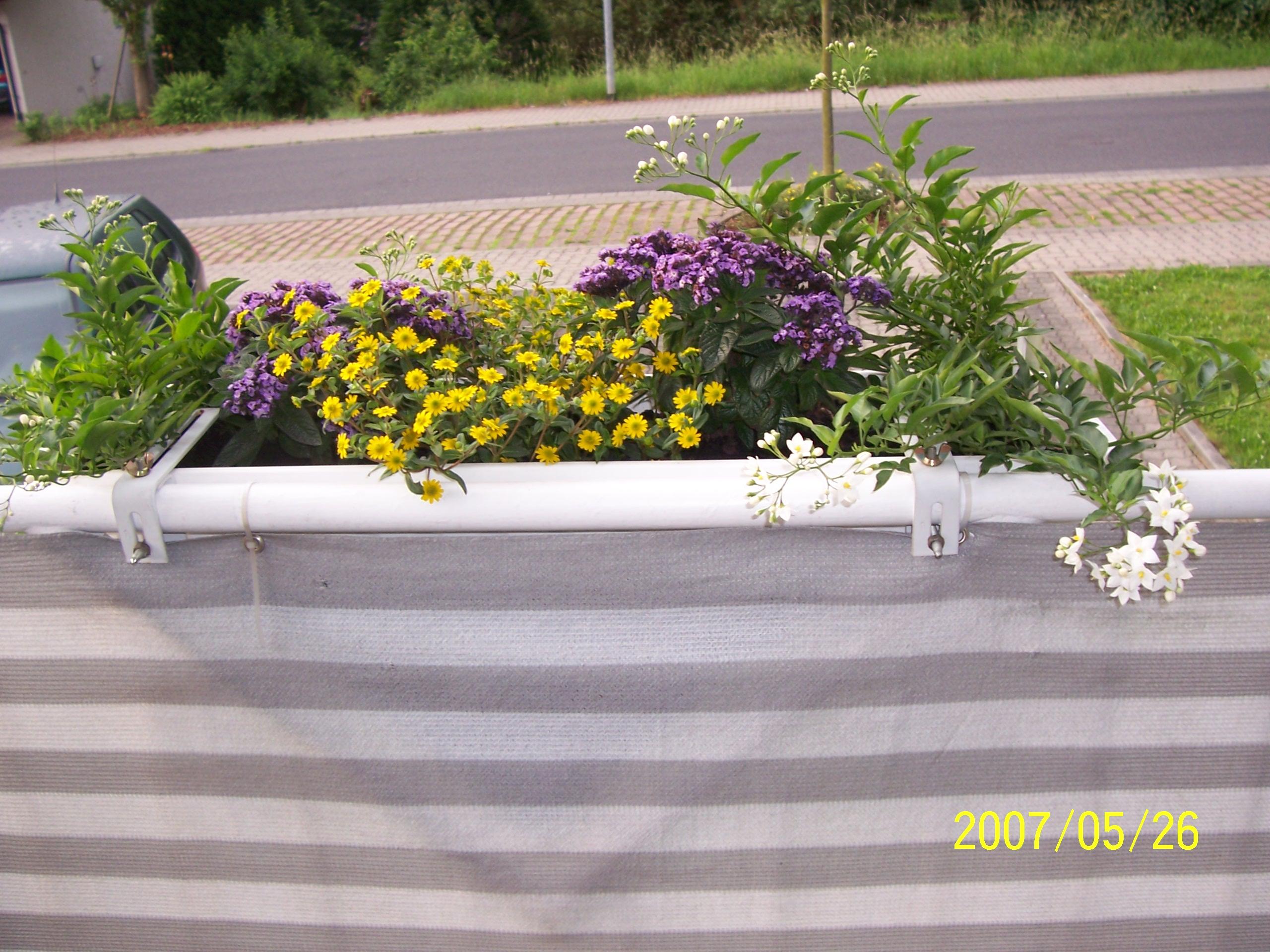 bepflanzung s dbalkon haus garten forum. Black Bedroom Furniture Sets. Home Design Ideas