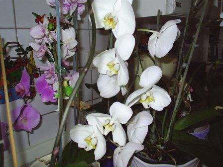 orchidee bl ht nicht mehr haus garten forum. Black Bedroom Furniture Sets. Home Design Ideas