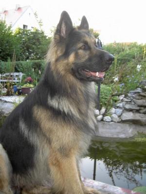 Ständig angemacht Hund Leine 3276552974