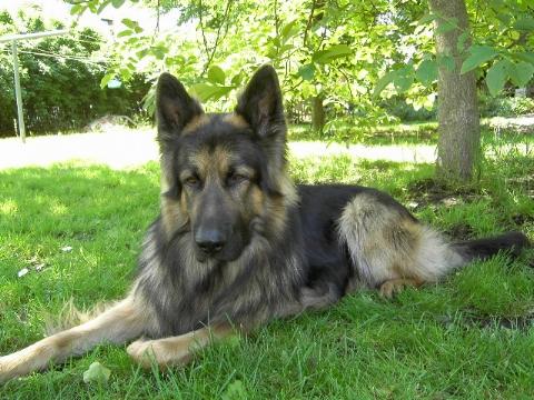 Ständig angemacht Hund Leine 2898712302