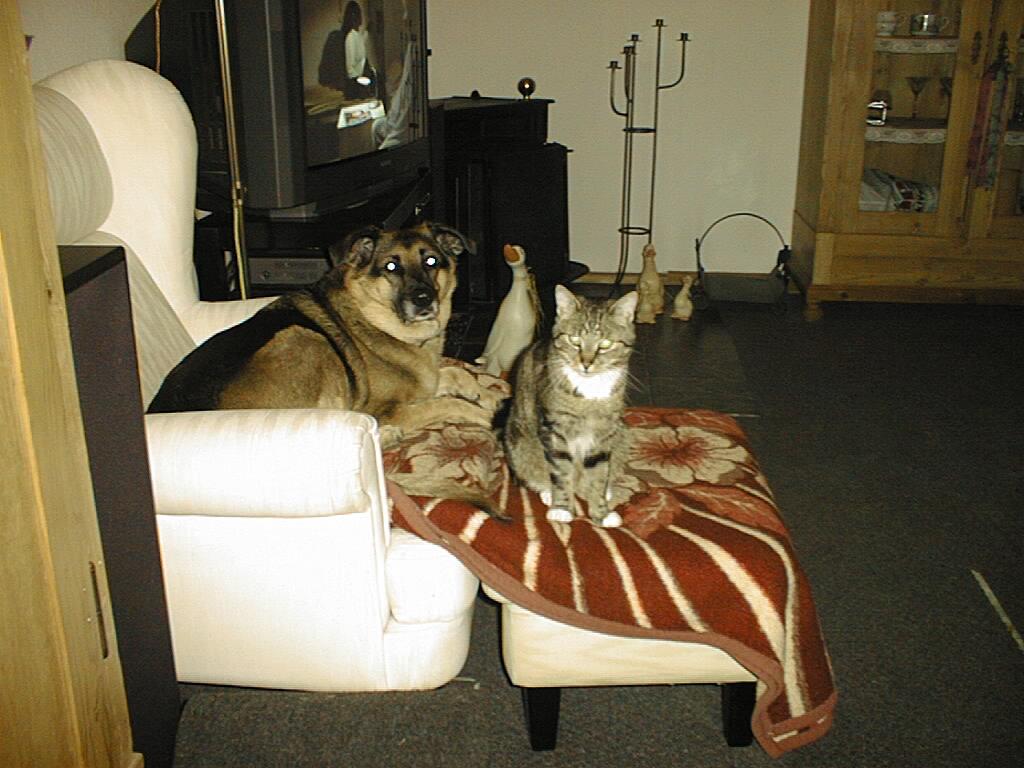 hilfe dringend hund quiekt noch 5 stunden nach der op hund katze maus forum. Black Bedroom Furniture Sets. Home Design Ideas