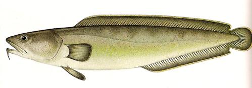 Wochenende Suche Fischpfanne 1399656163