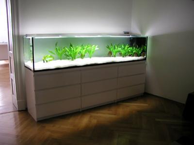 axolotl anschaffung und haltung aquarien einrichtung das gro e axolotlforum. Black Bedroom Furniture Sets. Home Design Ideas
