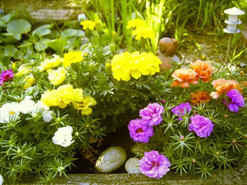 blumen auf an der terrasse sommer 2006 fotoalbum natur landschaft bei chefkoch de. Black Bedroom Furniture Sets. Home Design Ideas