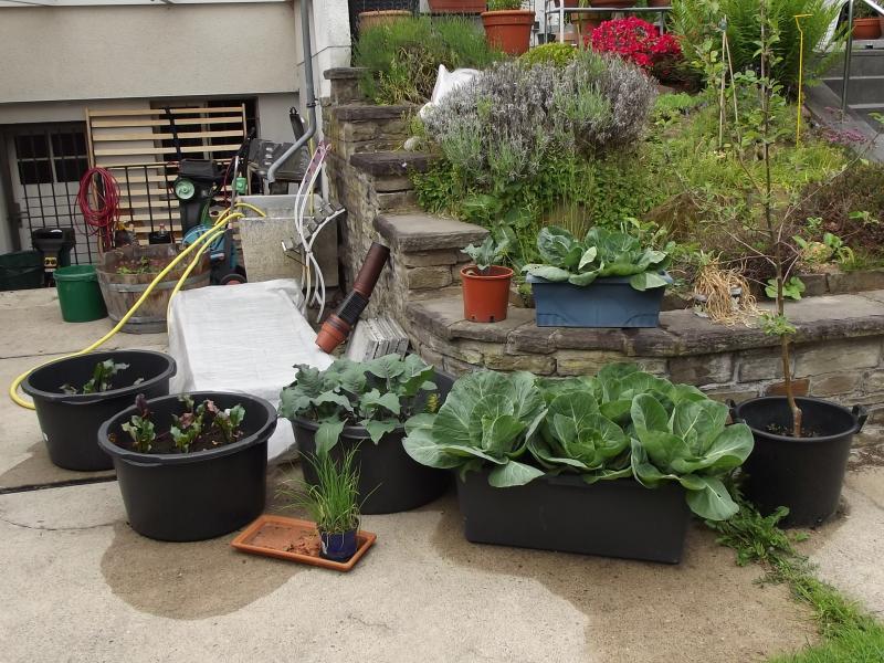 kartoffeln selbt anbauen auf dem balkon haus garten forum. Black Bedroom Furniture Sets. Home Design Ideas
