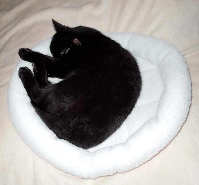 Unerwünschte Katze effizient loswerden 1578528953