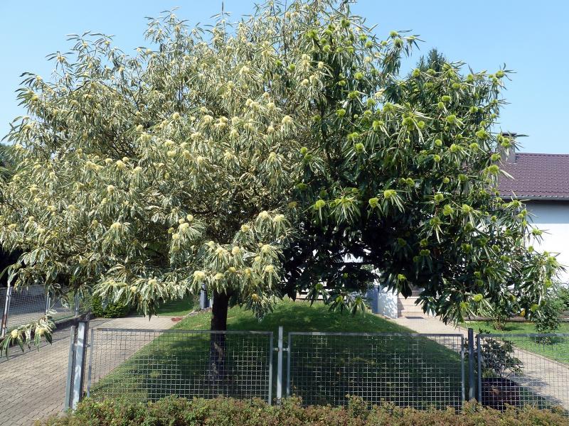 Was Ist Das Für Ein Baum was ist das für ein baum haus garten forum chefkoch de