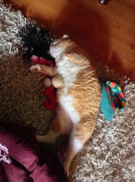 meine katzen haben fl he was kann ich tun hund katze maus forum. Black Bedroom Furniture Sets. Home Design Ideas
