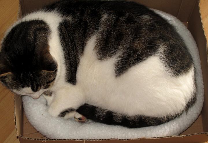 Unerwünschte Katze effizient loswerden 1649945937