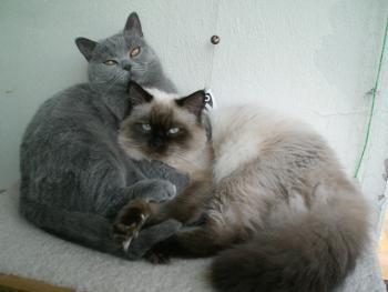 Zorro und Mika geniessen den warmen Tag auf dem Balkon