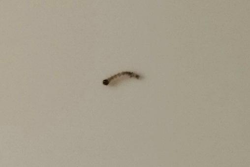 larven w rmer raupen fotoalbum sonstiges bei chefkoch de. Black Bedroom Furniture Sets. Home Design Ideas