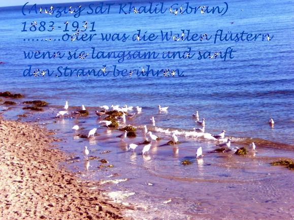Gedichte Und Sprüche Zum 19 Januar 2011 Sonstiges