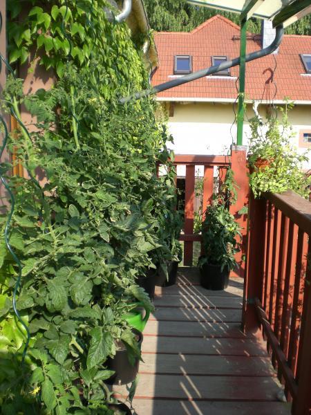 die tomaten vier wochen sp ter fotoalbum natur landschaft bei chefkoch de. Black Bedroom Furniture Sets. Home Design Ideas