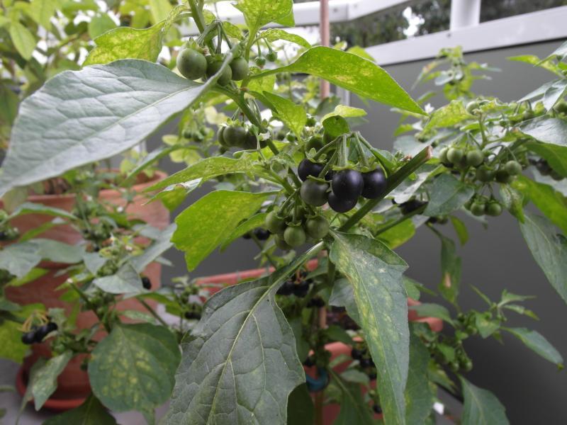 Welche pflanze  Welche Pflanze habe ich da? | Haus & Garten Forum | Chefkoch.de