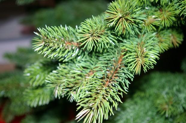 Spritzguss weihnachtsbaum fotoalbum sonstiges bei chefkoch de - Spritzguss weihnachtsbaum ...