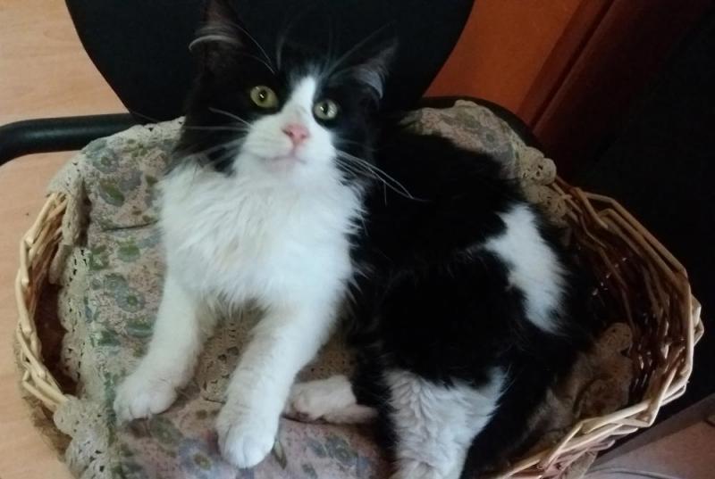 Halbjährige Katze zugelaufen Welch Mischung 758197311