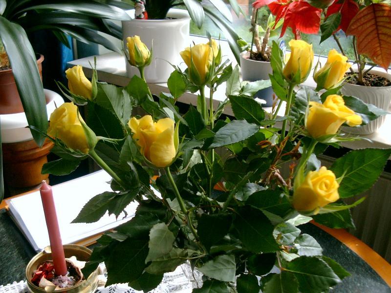 kartoffelsalat und orchideen in der bl te gelbe rosen. Black Bedroom Furniture Sets. Home Design Ideas
