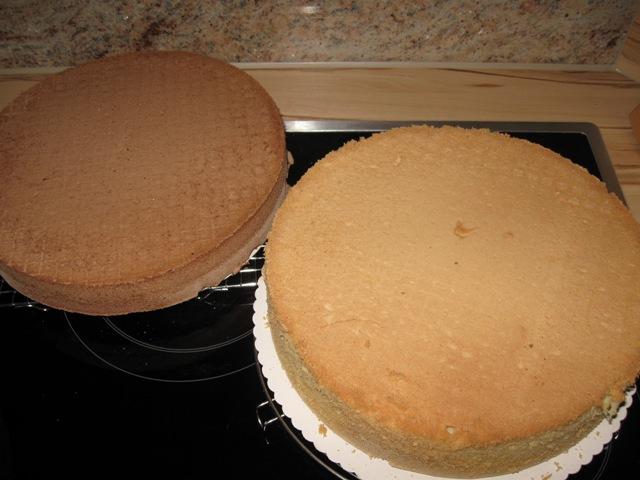 Dunkler Biskuitboden : toga biskuitboden dunkel 6 x 52 5 cm x 22 cm x 1 cm 950 g biskuitboden