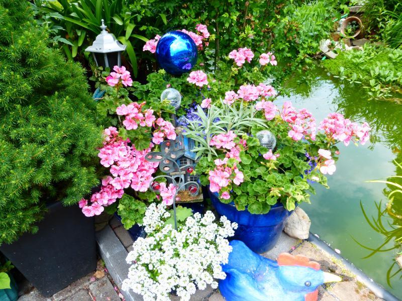 fertig bepflanzte balkonkasten kaufen