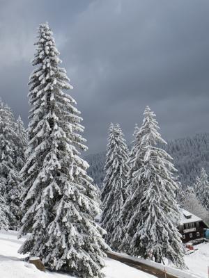 Gedichte Und Sprüche Am 1 Dezember 2013 1 Advent