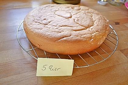Wiener Boden / Biskuit 9