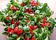 Feldsalat mit Knoblauch - Tomatendressing