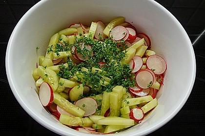Radieschen - Gurken - Salat 1