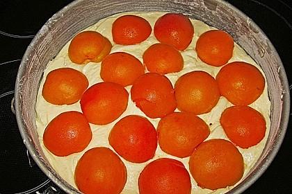 Aprikosenkuchen 3