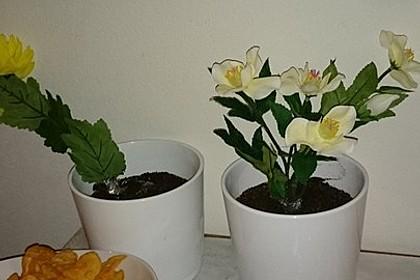 Blumenerde 50