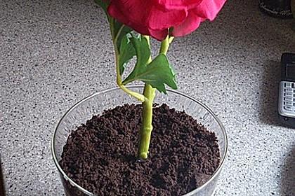 Blumenerde 24