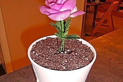 Blumenerde 44