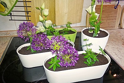 Blumenerde 2