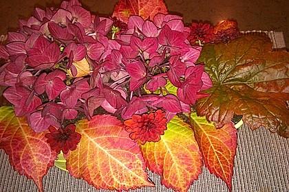 Blumenerde 55