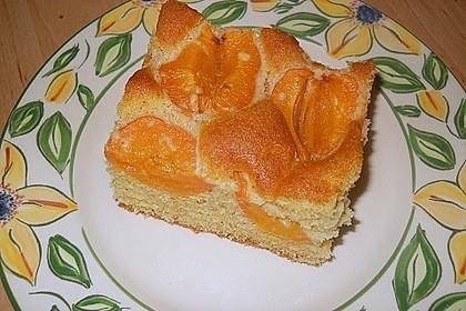 Marillenkuchen am Blech 15