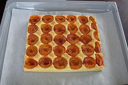 Marillenkuchen am Blech 2